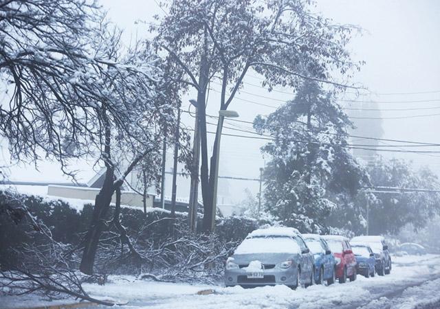 Muitas árvores não aguentaram o peso da neve. - Imagem: EPA